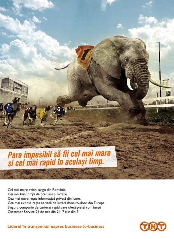 TNT – ELEFANTUL CAMPION